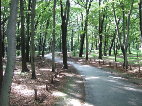 Koganei_park