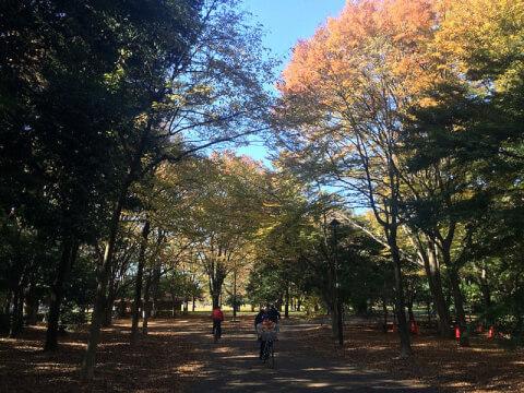 Koganei_park4