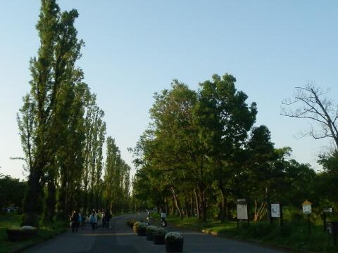 Mizumoto_park2