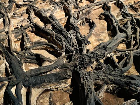 2万年前の植物