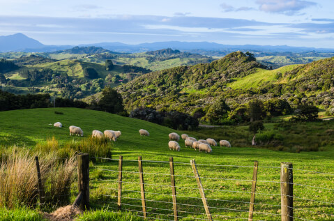 ニュージーランドのおすすめ観光スポット