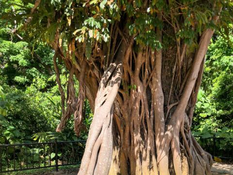 首里城公園の植物