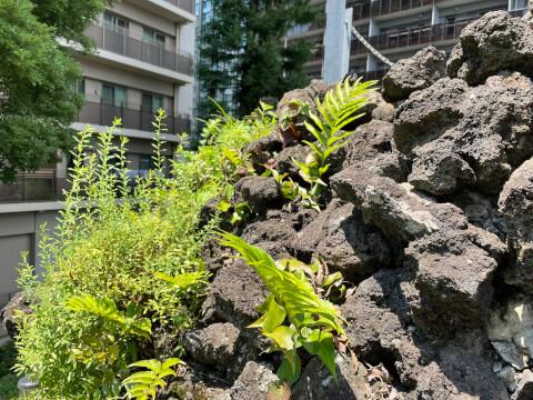 富士塚の溶岩石