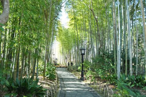 修善寺竹林の小径