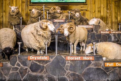 ニュージーランドのおすすめ観光スポット、アグロドーム