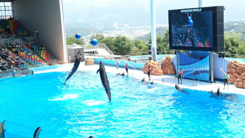 dolphin_show