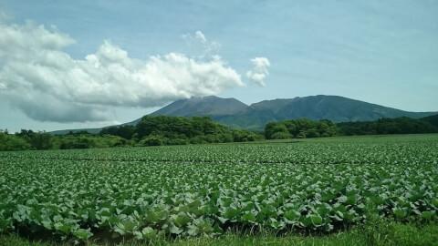 浅間山 キャベツ畑