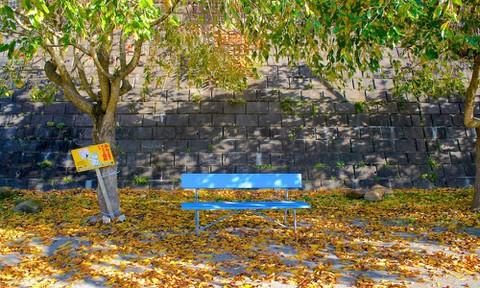 あの花:けやき公園の青いベンチ(実写)