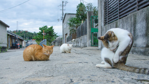 aoshima_cats