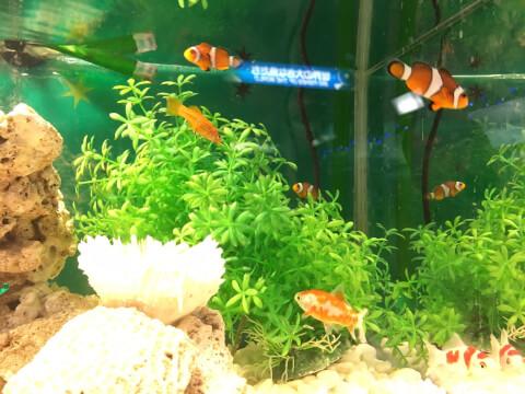 aquarium_water_tank