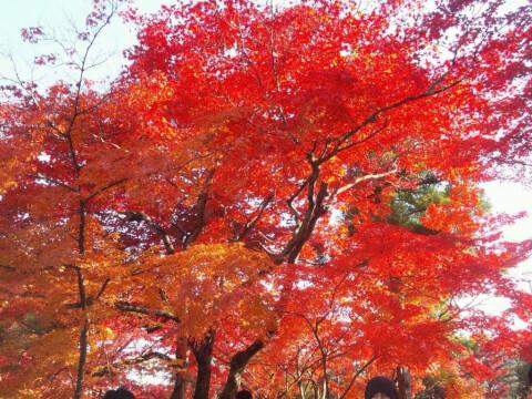 嵐山亀山公園紅葉