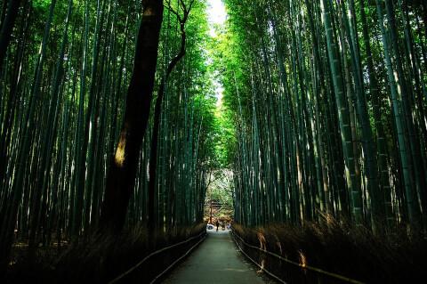 嵐山竹林px