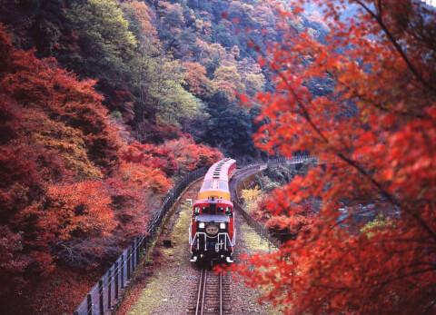 嵐山トロッコ秋