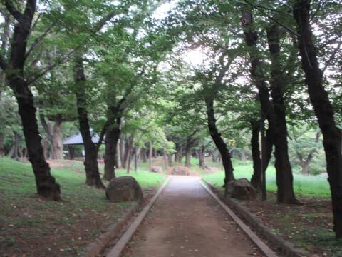 飛鳥山公園 夏