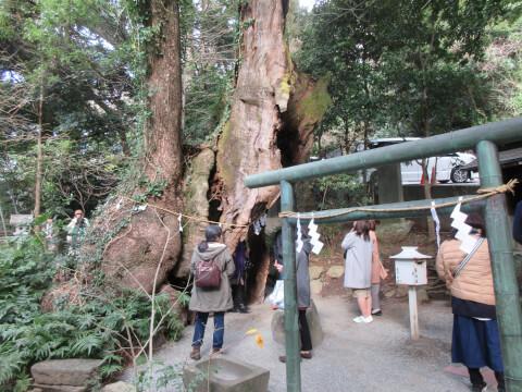来宮神社にある三峰神社と大楠