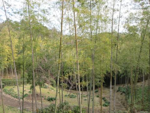 MOA美術館の「茶の庭」
