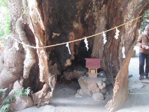 来宮神社の楠