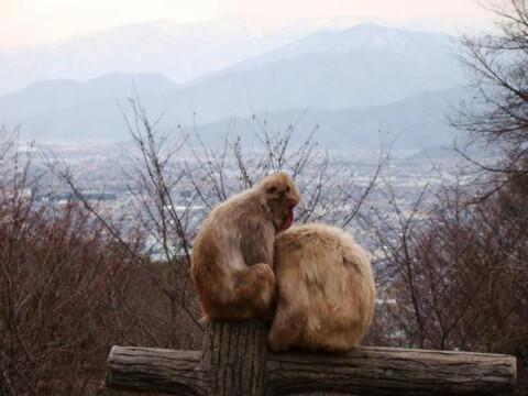 茶臼山動物園_サル