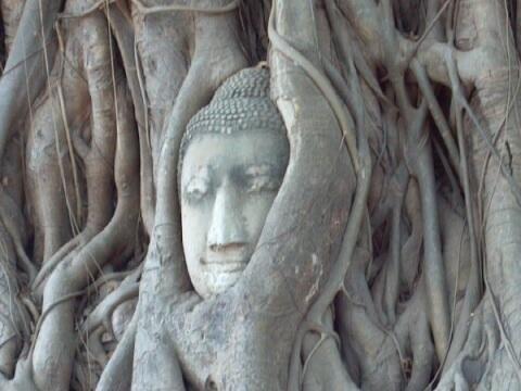 菩提樹の仏頭