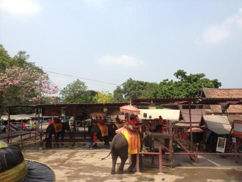 ゾウ乗り場遠景