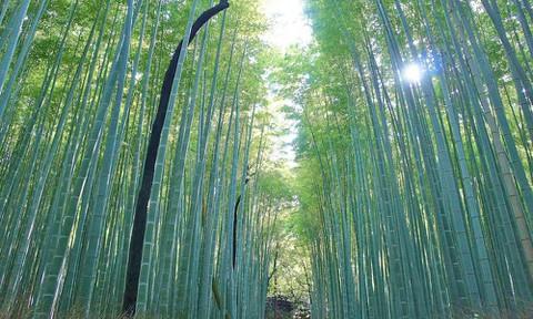 京都:竹林の道2