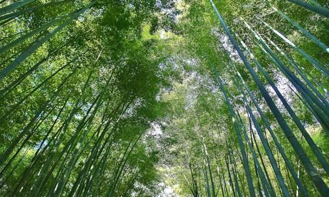 京都:竹林の道3