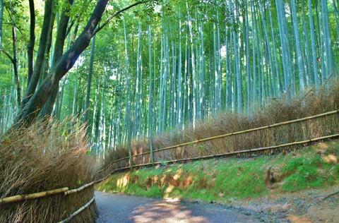 京都:竹林の道1