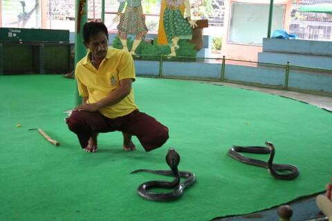 bangkok_snakefarm