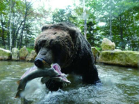 bear_nijimasu