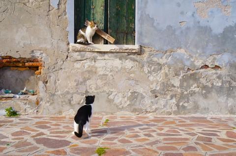 ブラーノ島 猫