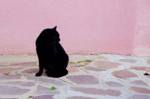 ブラーノ島 猫1