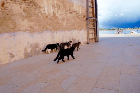 ブラーノ島 猫2