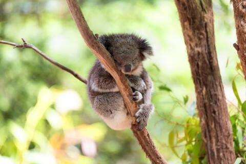 オーストラリアケアンズのおすすめ観光地