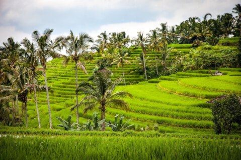 畑 インドネシア