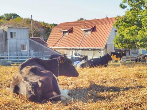 agriculturafarm