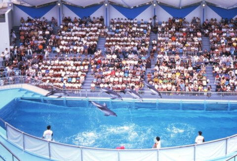 dolphinshow