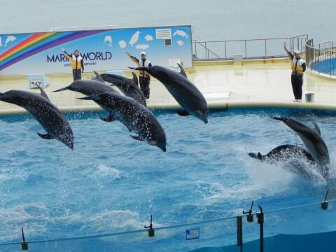 dolphinsshow
