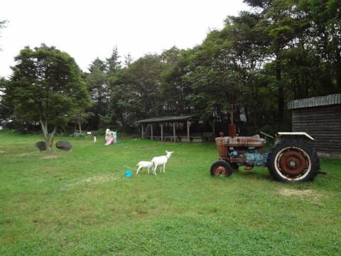 pony_farm