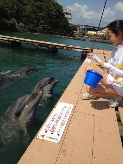 feed_dolphin