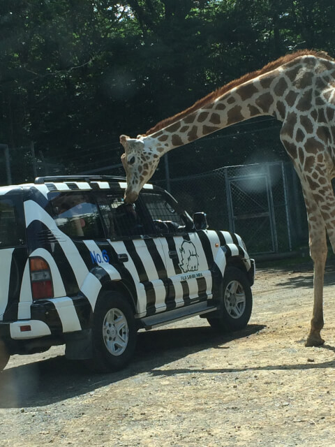 fuji_safari