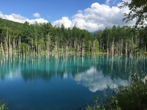 青い池_富良野