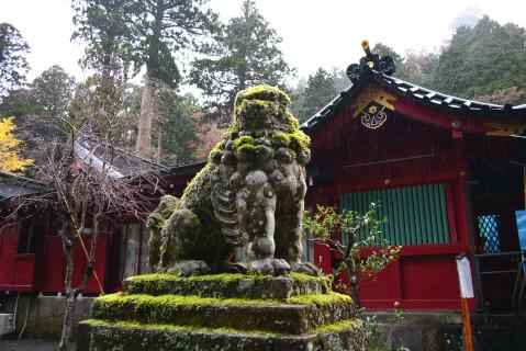 箱根神社狛犬アップ