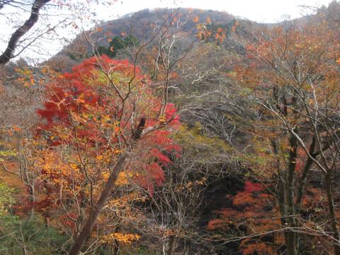 箱根ガラスの森美術館 紅葉の小径
