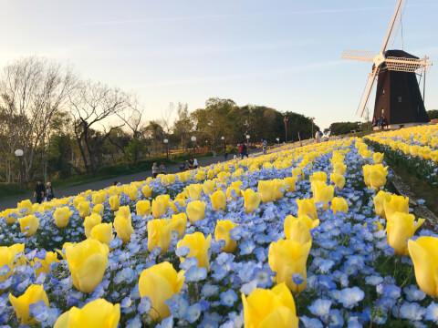大阪 フォトジェニック 花博記念公園 鶴見 ネモフィラ