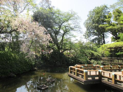 東郷神社 庭園