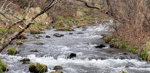 ハルニレ 川