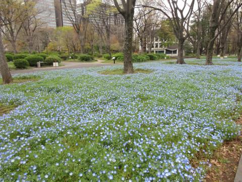 日比谷公園 花壇