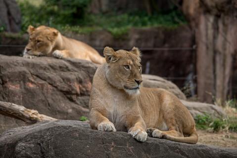 天王寺動物園サバンナゾーン