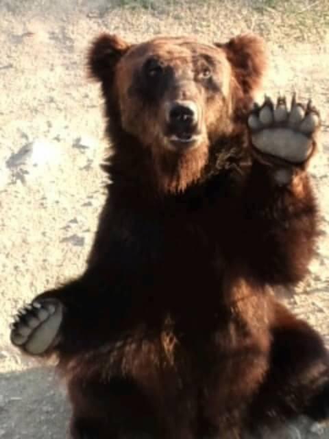 himeji_central_bear