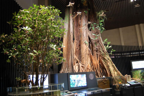 博物館 国立科学博物館地球館